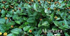 Akarkara3